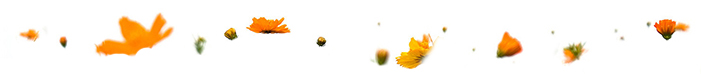 marigolds 4